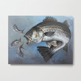 Striped Bass Chasing Bunker Metal Print