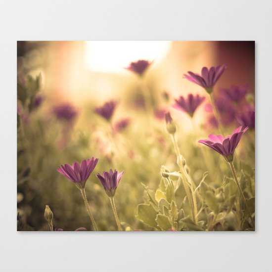 Sun in the meadow  Canvas Print