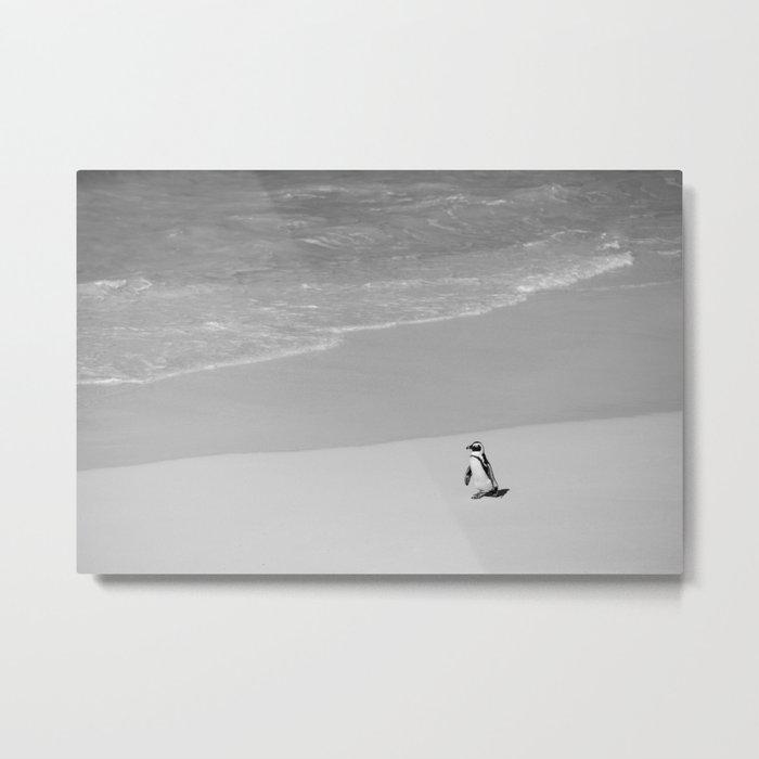 Lone African Penguin walking on beach Metal Print