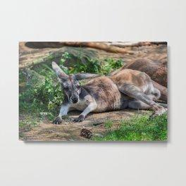 Pittsburgh Zoo - Kangaroo Metal Print