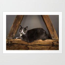 Cat on tree Art Print