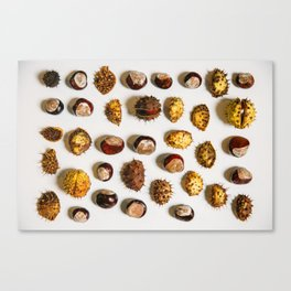 Chestnut Collection Photograph Canvas Print