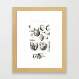 Human Anatomy Art Print HEART ATRIUM VENTRICLE Vintage Anatomy, doctor medical art, Antique Book Pla Framed Art Print