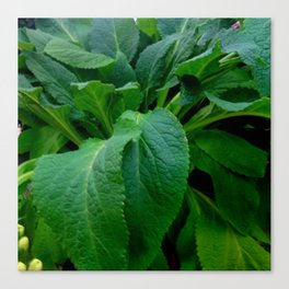 GREEN COMFREY LEAVES Canvas Print