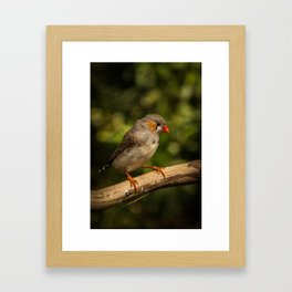Coastal Finch Framed Art Print
