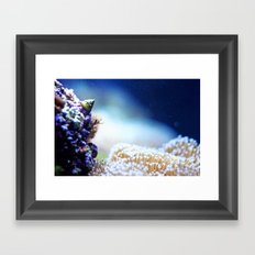 sea life Framed Art Print