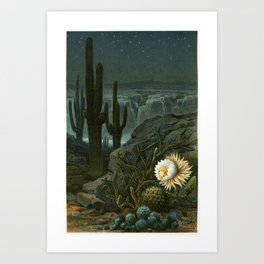 "Vintage Queen of the Night Blooming Cactus Desert Landscape from ""Pflanzenleben"" 1913 Art Print"
