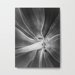 succulent plant texture in black and white Metal Print