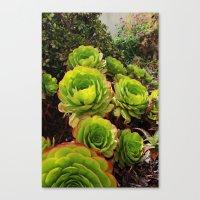 succulents Canvas Prints featuring Succulents  by Liveart4evr