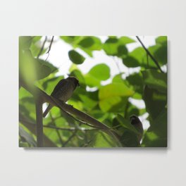 First Attraction Unaltered Metal Print