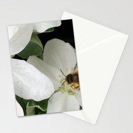 Apple Blossom Honeybee Stationery Cards