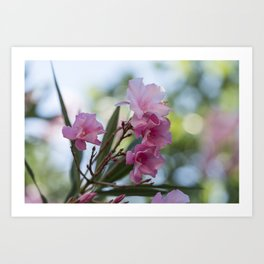 pink oleander in the garden Art Print
