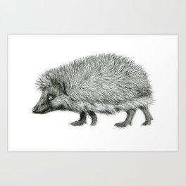 Funny Hedgehog SK050 Art Print