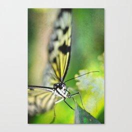 BFX | woodnymphomania (butterfly) Canvas Print