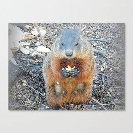 Ground Hog Canvas Print