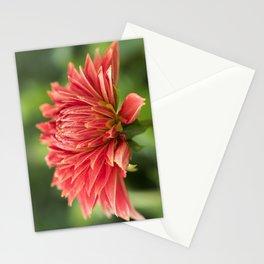 Parkland Glory Dahlia Stationery Cards