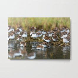Shorebirds I Metal Print