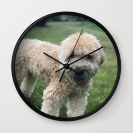 Smiling Soft Coated Wheaten Terrier Wall Clock