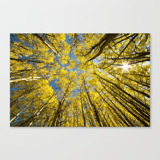 Trees Up Above Us Canvas Print