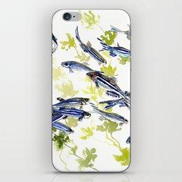 Fish Blue green fish design zebra fish, Danio aquarium Aquatic design underwater scene iPhone Skin
