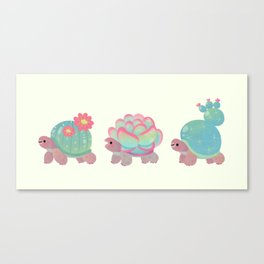 Cactus tortoise Canvas Print