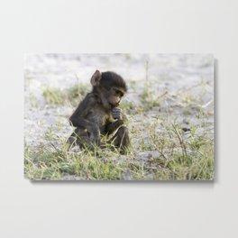 Young Baboon Metal Print