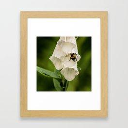 Bumblebee in the campanula Framed Art Print
