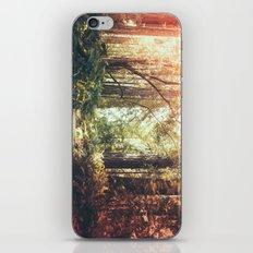 Beautiful California Redwoods iPhone & iPod Skin