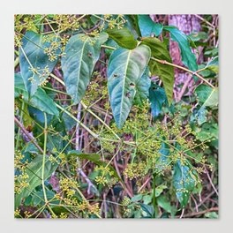 Budding in the rainforest Canvas Print