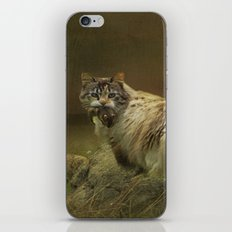 A Game of Cat and Mouse iPhone & iPod Skin