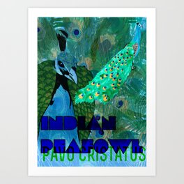 Pavo cristatus (Indian Peafowl/Peacock) Art Print