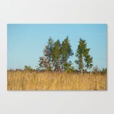 Birches in the golden field 450 Canvas Print