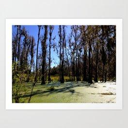 Southern Swamp Art Print