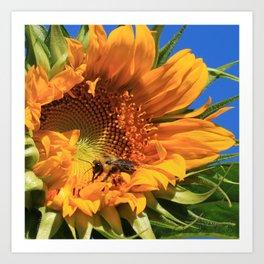 Sunny Bee Art Print