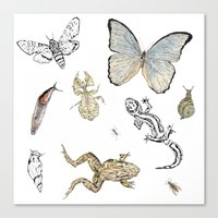 insects Canvas Prints featuring Insects by Claire Bond