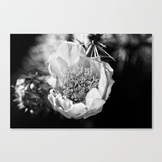 Cactus flower on a California hike Canvas Print