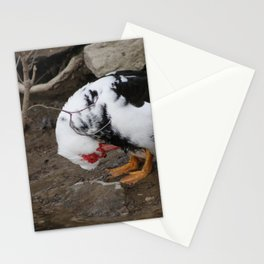 female muscovy duck in spring Stationery Cards