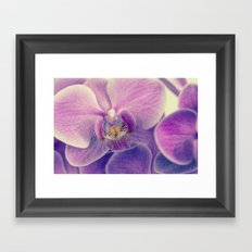 Orchid - lilac colored Framed Art Print