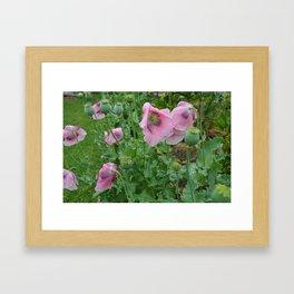 Poppies in rain Framed Art Print