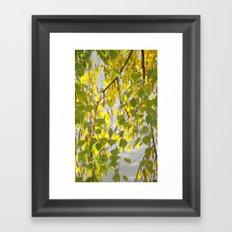 Birch Leaves 7165 Framed Art Print