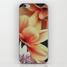 BUDDIES iPhone & iPod Skin