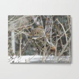 Snowglobe Mourning Dove Metal Print