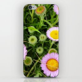 Seaside Daisy iPhone Skin