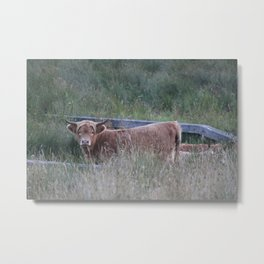 Higland Cow On The Lookout Metal Print