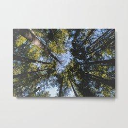 Vancouver Tree Tops Metal Print
