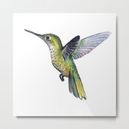 Hummingbird Watercolor Bird Animal Metal Print