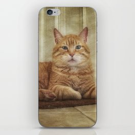 Cattitude Is Everything. iPhone Skin