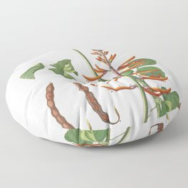 Plantae Selectae No 58-Corallodendron or Coral Tree by Georg Dionysius Ehret Floor Pillow