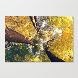 The tall one Canvas Print