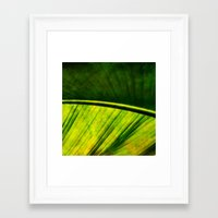 banana leaf Framed Art Prints featuring Banana leaf by helsch photography